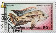 Acara for the Aquarium, Mongolia, stamp, fish, 1987, Aequidens spec, 50, Aequidens spp