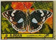African Blue Pansy, Ajman and its Dependencies, Ajman, stamp, insect, butterfly, 75 Dirham, Precis clelia, Junonia oenone