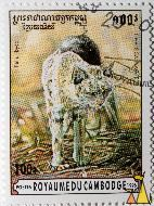 African wildcat, Royaume du Cambodge, Cambodia, stamp, mammal, cat, Felis silvestris lybica, Felis libyca, 100 R, Postes, 1996, Chat Sauvages