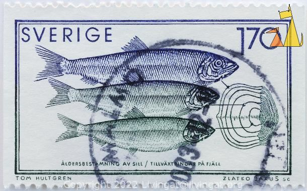 Ageing Herrings, Sverige, Sweden, stamp, fish, Clupea harengus, 1.70, Tom Hultgren, Zlatko Jakus sc, fish scale