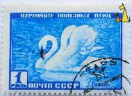 Angry Mute, CCCP, Russia, stamp, bird, swan, Cygnus olor, blue, 1 P, noyta