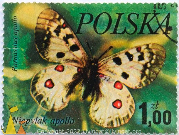 Apollo, Polska, Poland, stamp, insect, butterfly, 1.00 Zl, Niepylak apollo, Parnassius apollo
