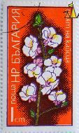 Apple?, Bulgaria, stamp, plant, tree, flower, 1 cm, nowa
