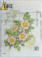 Apple rose, Éire, Ireland, stamp, plant, flower, 1990, 30, Rosa x hibernica