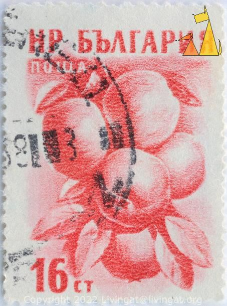 Apples in Tree, Bulgaria, stamp, plant, tree, fruit, Malus domestica, 16 Ct