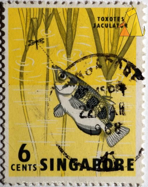Archerfish, Singapore, stamp, fish, Archerfish, Toxotes jaculator, 6 cents, Toxotes jaculatrix