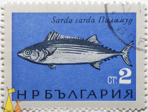 Atlantic bonito, Bulgaria, stamp, fish, Sarda sardas, 2 Ct