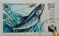 Atlantic salmon, Polska, Poland, stamp, fish, fishing, 1.50, Losos, fishing, flyfishing, fly, 1979, PZW, Salmo salar