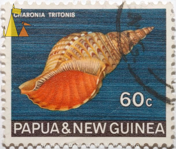 Atlantic trumpet triton, Papua and New Guinea, Papua New Guinea, stamp, shell, Charonis tritonis, 60 c, Charonia tritonis