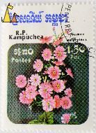 Babe or Fairy primrose, R.P. Kampuchea, Cambodia, stamp, plant, flower, 1.50 Riels, Postes, Primula malacoides