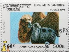Bactrian Camel, Royaume du Cambodia, Cambodia, stamp, mammal, Animaux sauvages, 500 R, Postes, 1996, Camelus ferus, Camelus bactrianus