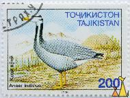 Bar-headed Goose, Tajikistan, stamp, brid, 200, 1995, duck, Anser indicus