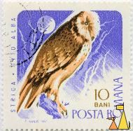 Barn Owl in Moonlight, Romana, Romania, stamp, bird, moon, 10 Bani, Posta, F Ivanus, 1967, Striga, Tyto Alba