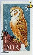 Barn Owl on the Barn, DDR, Germany, stamp, bird, Tyto alba, 5, Schleierule