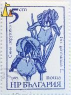Bearded iris, Bulgaria, stamp, plant, flower, 5 cm, nowa, Iris germanica