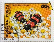 Bee beetle on a Yarrow, Magyar, Hungary, stamp, insect, beetle, 40 f, Posta, 1980, Forgacs M, Achillea millefolium, Trichodes apiarius