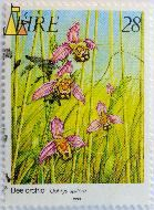 Bee orchid, Éire, Ireland, stamp, plant, flower, orchid, 1993, 28, Ophrys apifera