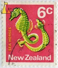 Big-belly Seahorses, New Zealand, stamp, fish, red, 6 c, sea horses, Hippocampus abdominalis