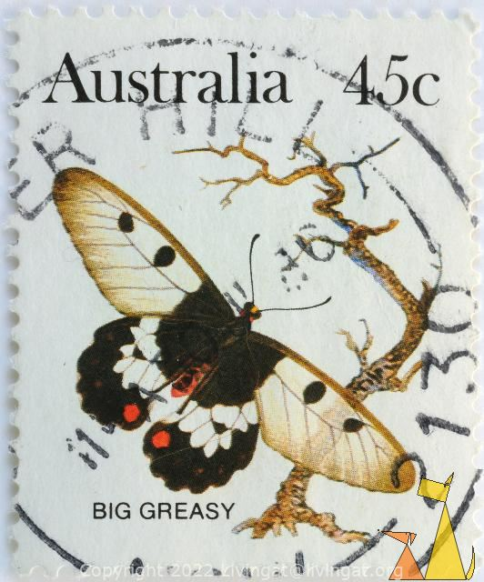 Big Greasy, Australia, stamp, insect, butterfly, 45 c, Cressida cressida