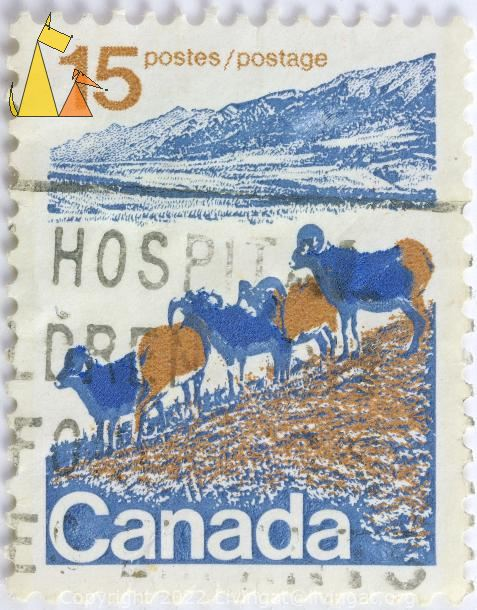 Bighorn Sheep, Canada, stamp, mammal, hospital, 15, postes, postage, Ovis canadensis
