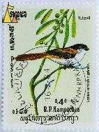 Black-headed Shrike, RP Kampuchea, Cambodia, stamp, bird, 1984, 0.40 Riel, Postes, 1984-02-16, Lanius schach nigriceps