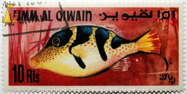 Black-saddled toby, Umm al Qiwain, UAE, stamp, fish, Umm al Qiwain, 10 Rls, Black-saddled toby, Canthigaster valentini