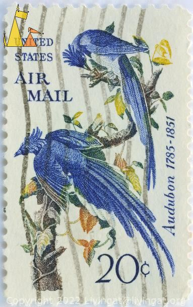 Black-throated Magpie-Jay, United States, USA, stamp, bird, Air Mail, 20 c, 1785-1851, Calocitta colliei