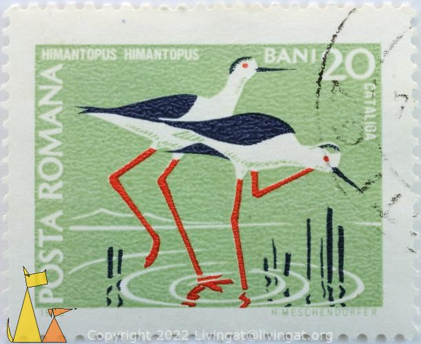 Black-winged Stilts, Romana, Romania, stamp, bird, 1968, Posta, H Meschendörfer. 20 Bani, Catalioa, Himantopus himantopus