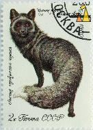 Black Fox, CCCP, Soviet, Russia, stamp, mammal, Vulpes vulpes, from behind, 2 k, 1980