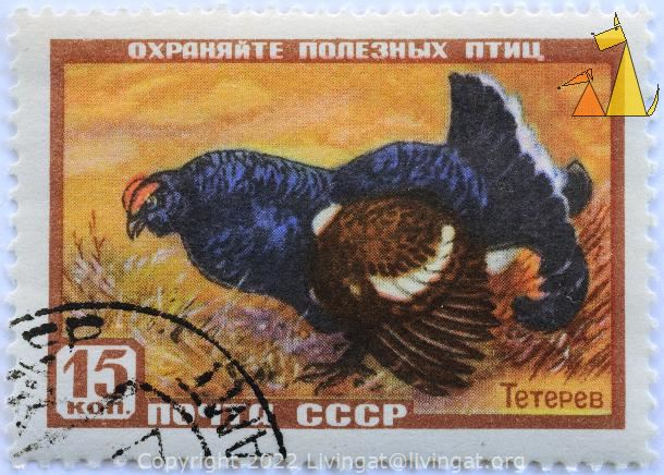 Black Grouse Ready to Fight, CCCP, Russia, stamp, bird, fight, Lyrurus tetrix, noyta, 15 Kon