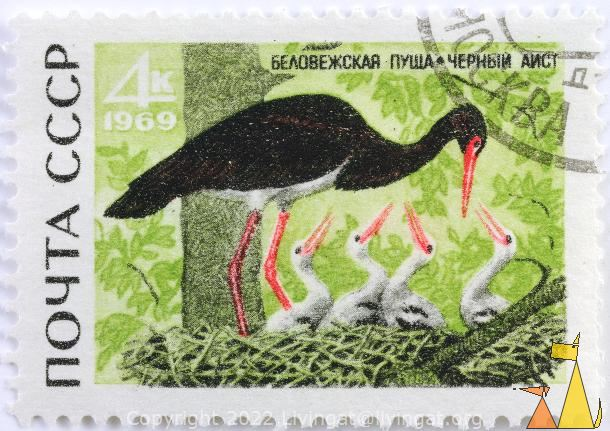 Black Stork with Young Ones, CCCP, Russia, stamp, bird, Ciconia nigra, 4 K, 1969, noyta