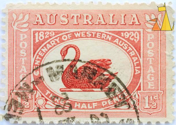 Black Swan in Red, Australia, stamp, bird, Cygnus atratus, Three half pence, 1½ d, 1829-1929, 1929, Postage
