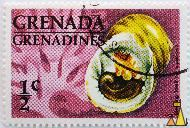 Bleeding Tooth, Trenada Grenadines, Grenada, stamp, shell, ½ c, wine, red, Nerita peloronta