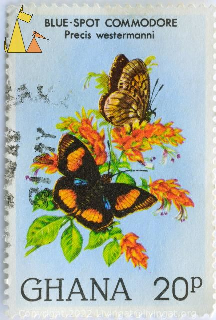 Blue-spot Commodore, Ghana, stamp, insect, butterfly, 20 p, Precis westermanni, Junonia westermanni