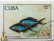 Blue Chromis Damselfish, Cuba, stamp, fish, correos, 1969, 5, Chromis marginatus, Chromis cyanea