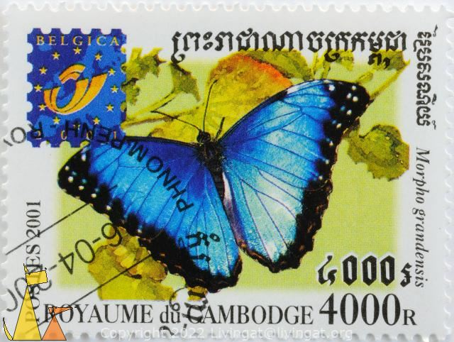 Blue Morpho, Royaume du Cambodge, Cambodia, stamp, insect, butterfly, Postes, 2001, Belgica, 4000 R, Morpho grandensis, Morpho granadensis