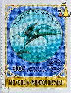 Blue Mother with Calf, Mongolia, stamp, mammal, fish, whale, mother, calf, 30, Antarctic Exploration, 1980, Balaenoptera musculu