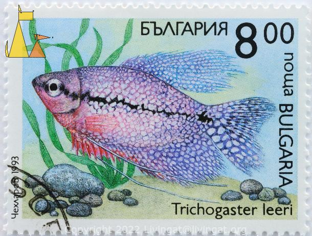Blue and Red Pearl Gourami, Bulgaria, stamp, fish, nowa, 8.00, 1993, Trichogaster leeri