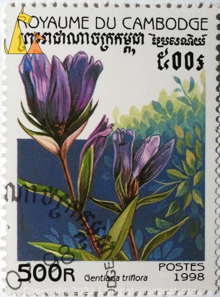 Blue gentiana, Royaume du Cambodge, Cambodia, stamp, plant, flower, 500 R, Postes, 1998, Gentiana triflora