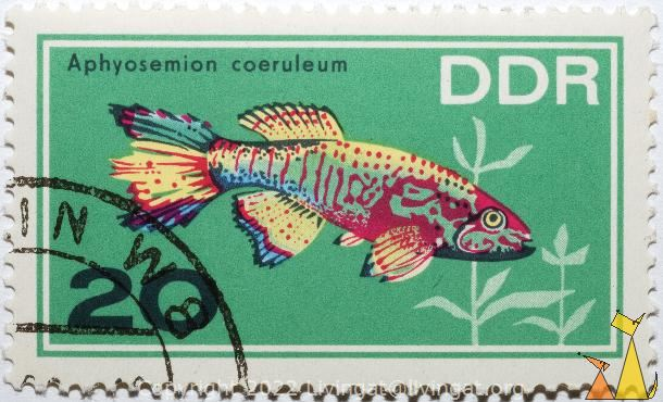 Blue gularis, DDR, Germany, stamp, fish, 20, Aphyosemion coeruleum