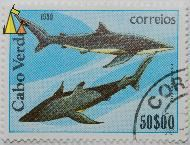 Blue shark, Cabo Verde, Cape Verde, stamp, fish, $50.00, 1980, correios, Prionace glauca