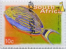 Bluebanded surgeon, South Africa, stamp, fish, 10 c, Chris von Rooyen, Acanthurus lineatus