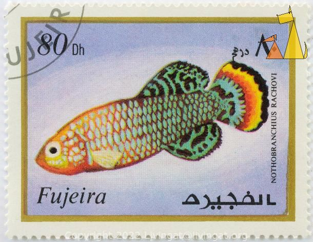 Bluefin Notho, Fujeira, Fujairah, stamp, fish, 80 Dh, Nothobranchius rachovi, Nothobranchius rachovii