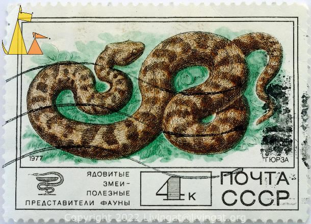 Blunt-nosed viper, CCCP, Russia, stamp, reptile, Macrovipera lebetina, snake, Гюрза, Blunt-nosed viper, 1977, 4 k