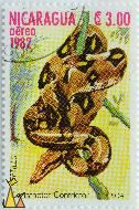 Boa constrictor, Nicaragua, stamp, reptile, snake, Boa constrictor, Constrictor constrictor, Reptiles, Boa, aéreo, 3.00, 1982