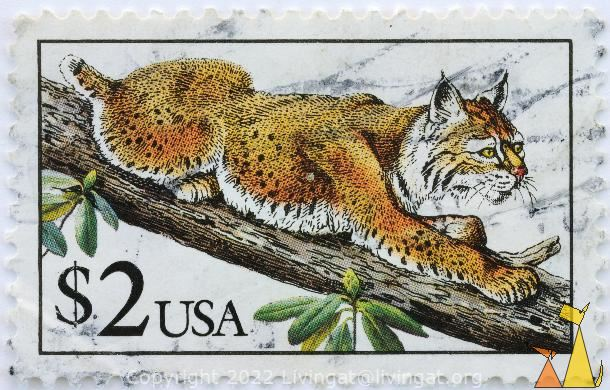 Bobcat in Tree, USA, stamp, mammal, cat, $2, Lynx rufus