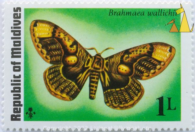 Brahmeid Moth, Republic of Maldives, Maldives, stamp, insect, butterfly, moth, 1 L, Brahmaea wallichii