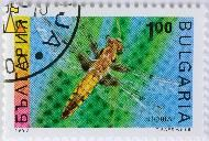 Broad-bodied Chaser, Bulgaria, stamp, insect, dragon fly, 1993, 1.00, Libellula depressa