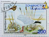 Brown-headed Gull, Tajikistan, stamp, brid, 200, 1995 Larus brunnicephalus, Chroicocephalus brunnicephalus