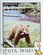 Brown Bear with Fish, Romana, Romania, stamp, mammal, Ursus arctos, bear, fish, 9 L, Posta, 1992